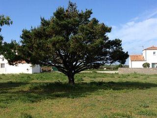 Terrain constructible L'AIGUILLON SUR MER  (85460)
