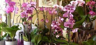 Fleuriste Proche de VERSAILLES  ()
