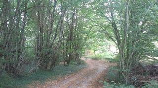 Terrain agricole VILLEBOIS LAVALETTE  ()
